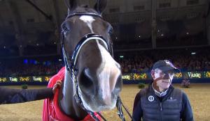 Dressage horse valegro