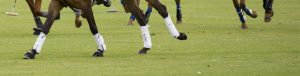 Polo pony legs all with polo wraps
