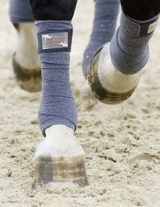 Close up of horse legs with polo wraps on