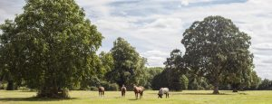 Polo ponies turned out as part of the polo pony livery