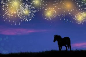 Animal safety - horse in field with fireworks