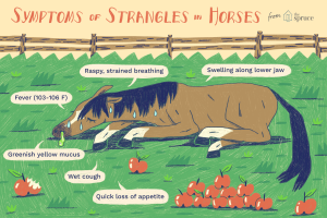 Strangles Symptoms image horse