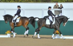 two Dressage horse in action