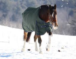 Winter Horse Care Tips - Horse in Rug in snow field