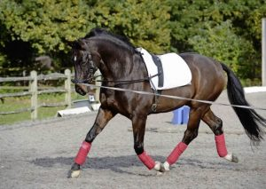 Spring Horse Care Tips - Lunging horse